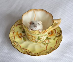 Nimble Matters Teacup Taxidermy Mouse