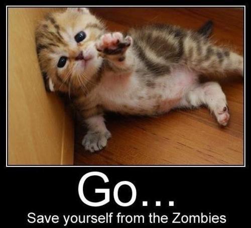 Zombie Apocalypse Kitty