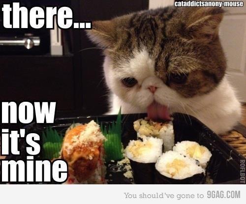 pittsburgh cat rescue
